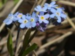fiori-casone001