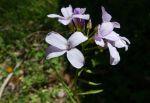 fiori-casone002