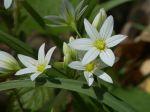 fiori-casone005