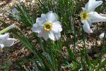 fiori-mutti004