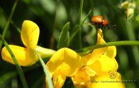 insetto1