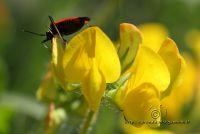 insetto2