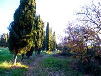 pomarance-roccasillana_001