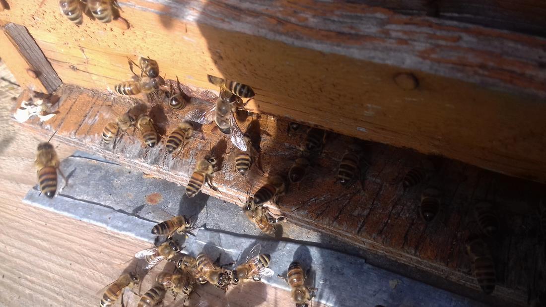 api operaie 003