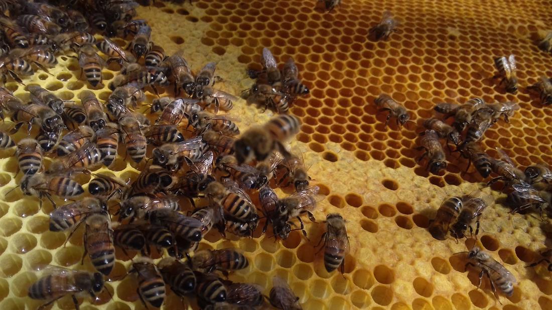 api operaie 005
