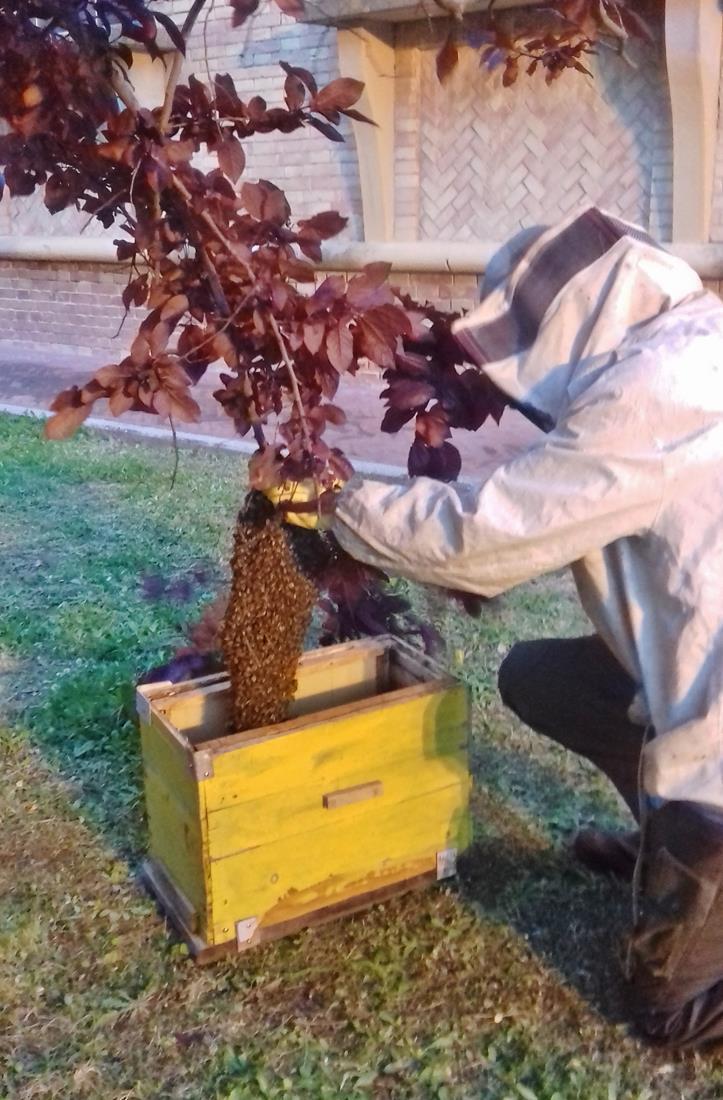 apicoltore 011