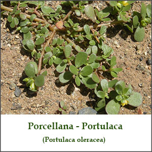 porcellana